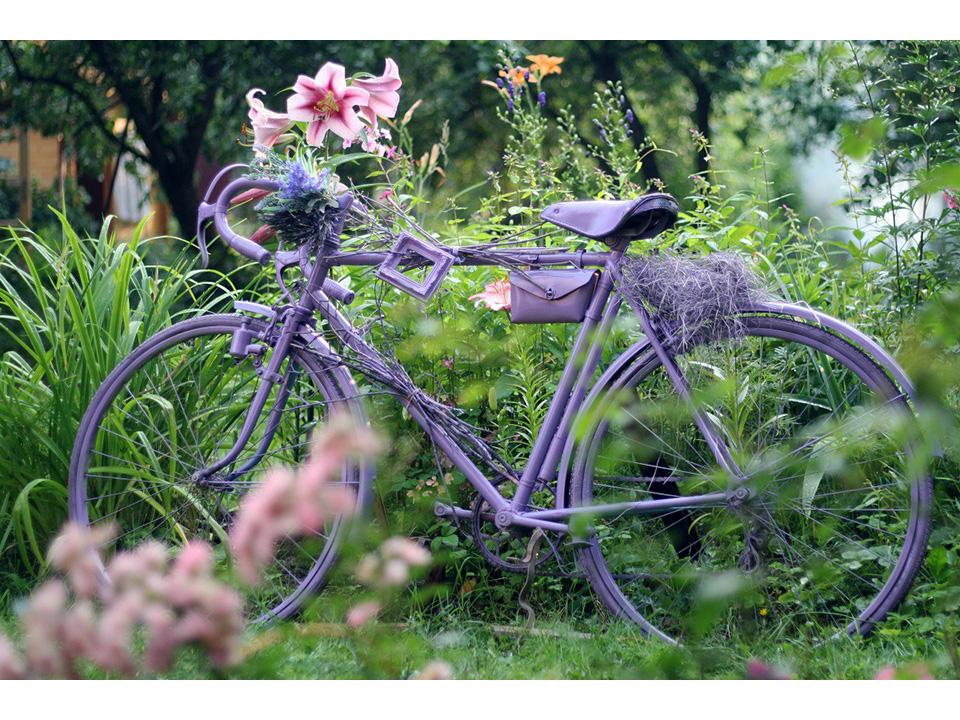 Фотозона «Сиреневый Велосипед»